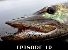 20th Season Episode 10 | Angler & Hunter Television