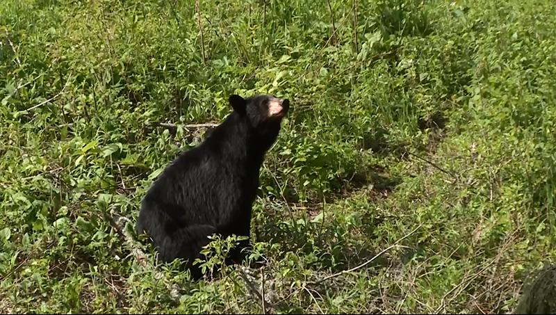 Episode 2: Ontario Spring Bear Hunt