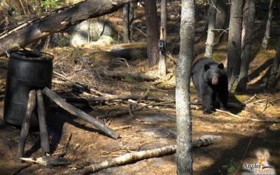 Episode 2: Ontario Spring Black Bear